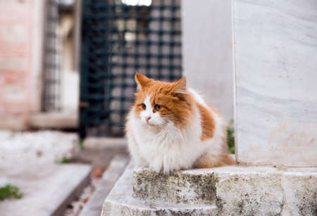 Front portrait of a stray orange tabby cat with long fur, sitting at a historic graveyard, looking away from lens.