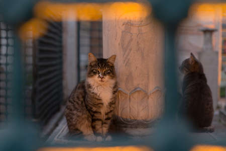 Tabby cat framed by turquoise iron bars sitting beside an Ottoman tomb at dusk, accompanied by another stray cat. 免版税图像