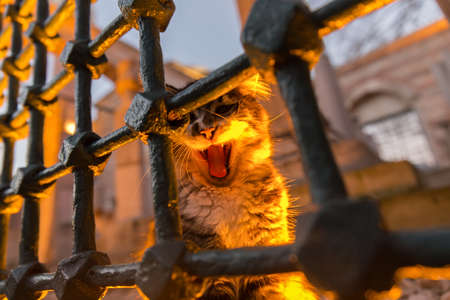Portrait of a stray cat guarding a historic Ottoman graveyard in old Istanbul. The cat iis illuminated by spotlights from under, and has opened its mouth showing teeth.