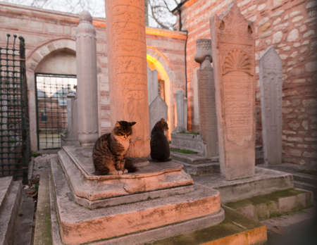 Wide angle view of an Ottoman graveyard with gravestones and two cats at dusk, with tungsten lights Foto de archivo