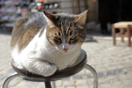 Obese tabby cat sitting at a stool outdoors in a sunny day in the middle of a cobblestone street.