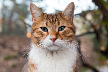 Slanted eye cat portrait