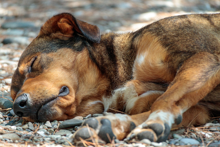 sleeping homeless dog sleeps on stone, summer day outside the home
