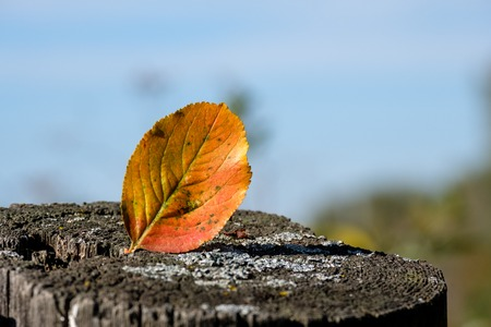 autumn leaf on the old Board on the background of blue sky