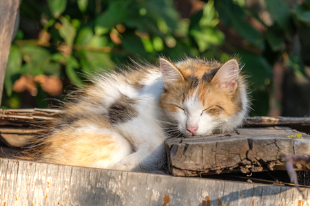 a stray cat sleeping on an old discarded furniture