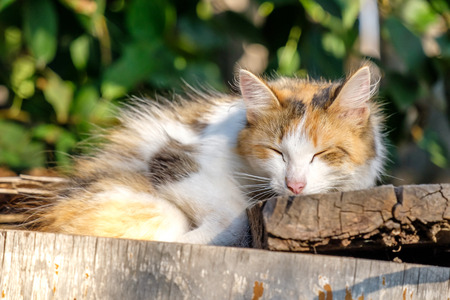 the old discarded furniture sleeping tricolor cat