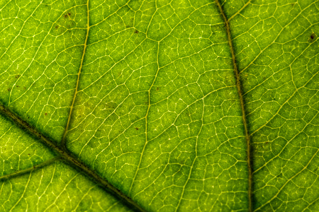 natural photograph of a green sheet without treatment, close-up