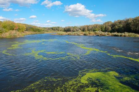 green algae on the river for around the forest and blue sky