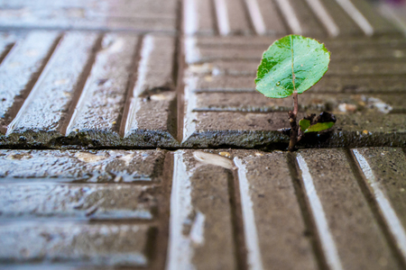 a plant with a leaf sprouted through the paving, wants to live