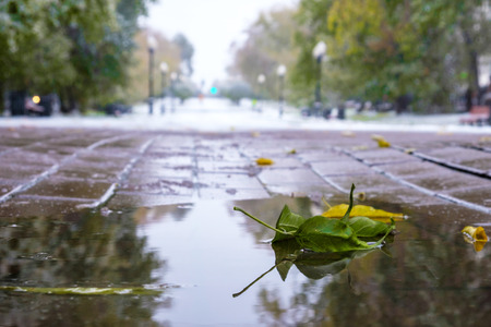 green leaf lies in puddles on the paving tiles, the first snow fell, the big city