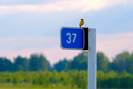 a little bird sitting on a road sign markers kilometers figure 37, on the background of summer landscape awaits
