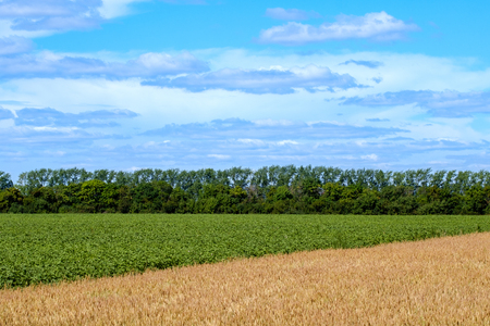 diagonal separating the fields on the green and yellow horizon in the background and the sky, summer time on the field before harvesting Imagens