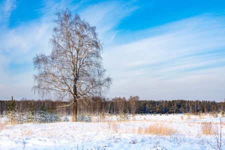 tree on the field in winter, snow and blue sky in feathery clouds Banco de Imagens