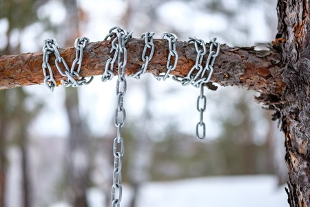 the chain is wound around a pine, winter forest in the afternoon Standard-Bild - 122317718