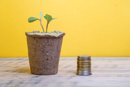 wooden surface on which there is a pot with a potted plant to the right of the pot stack of money, the background is yellow