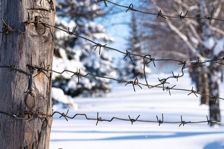 against the background of the forest area is a pillar on which the barbed wire, the winter border of Russia