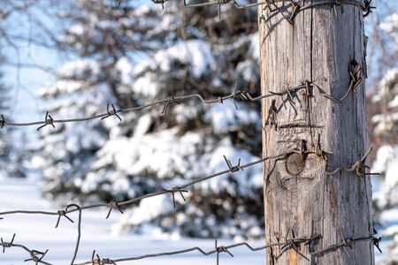 winter border area of the country in the forest barbed wire and snow