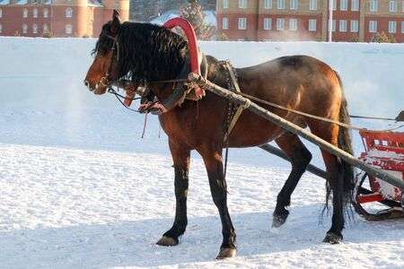 in winter horse-drawn sleigh rides, steam from the nostrils, the snow and cold in the Russian village