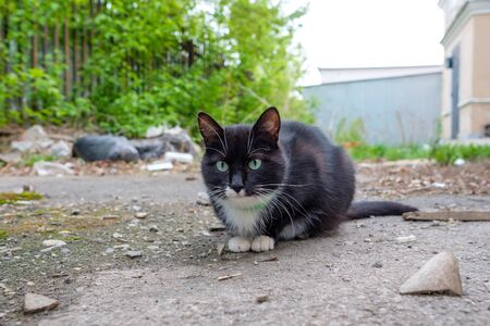 black-and-white cat sitting on the road in collar got lost