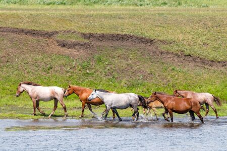 walking along the shoreline horses of different colors on the water Sunny day green grass