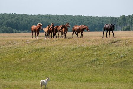on a hill on a clear summer day there are horses a goat looks down at the horses Stockfoto