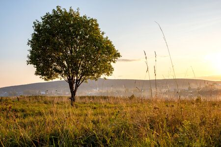 tree growing on the outskirts of the village in the evening background hilly terrain. a lone tree in the evening on a meadow