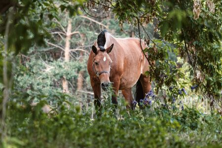 among the leaves of trees grazing horse red. pet on grazing in the forest Banque d'images