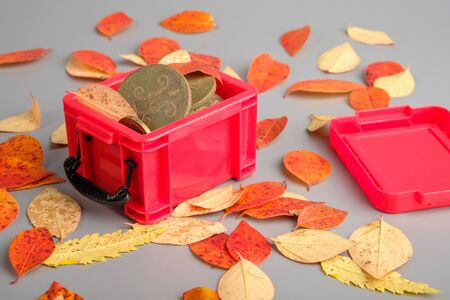 an old coin and autumn leaves in a red plastic container. autumn finds