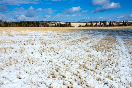landscape of rolling hills in winter, clear snow and blue sky over the field. sloping field and forest area covered with the first snow