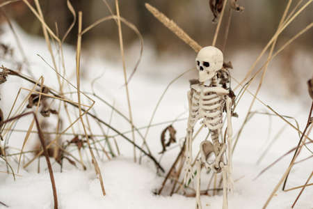 human skeleton on a background of snow and dry grass. death and nature 版權商用圖片