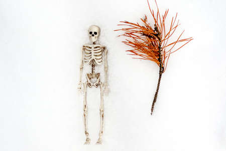 the human skeleton lies in the snow next to a dry pine branch. dead branch and man