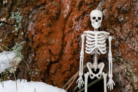 human skeleton on the background of a tree trunk. unity of death and nature