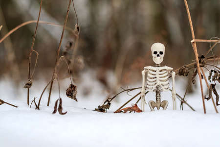 human skeleton among snow and dry grass. comparison of winter and death