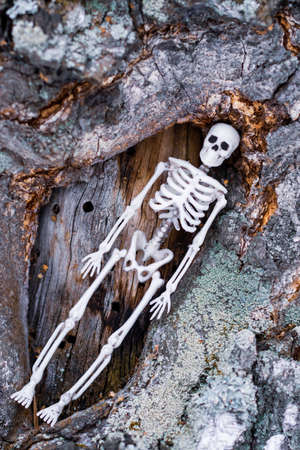 a toy skeleton of a person is in a tree trunk. harmony of death and nature