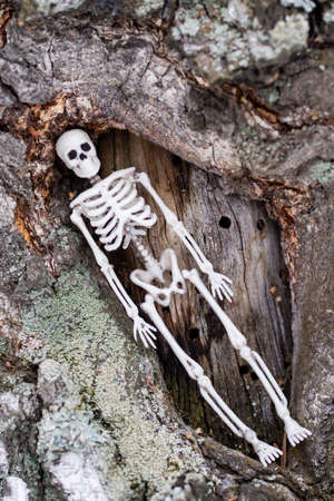 the human skeleton lies diagonally among birch wood. unity of nature and man