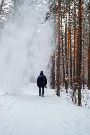 snow falling from a tree on the head of a walking man along a forest path. strong wind in a snowy forest