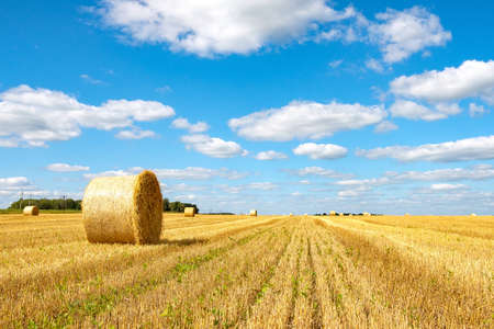 bright yellow bales of hay on a farm field for animal feed for winter