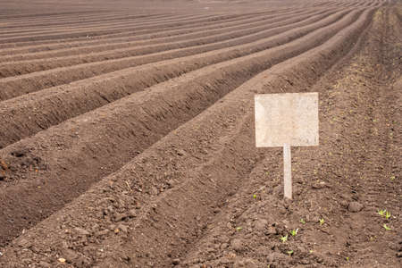 an unmarked plaque is stuck in the soil with planted potatoes. rows of potatoes, just planted