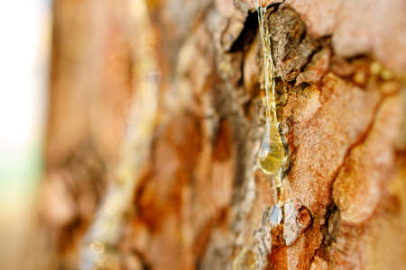 resin on pine trunk background out of focus, close-up of liquid amber resin Stock fotó