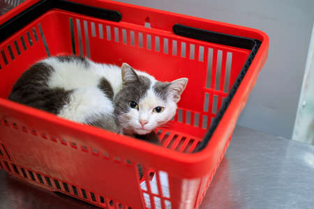 the cat sleeps in the shopping basket, looks out and looks at us