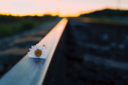 on metal rails flower during sunset, hard metal and soft plant Stock fotó