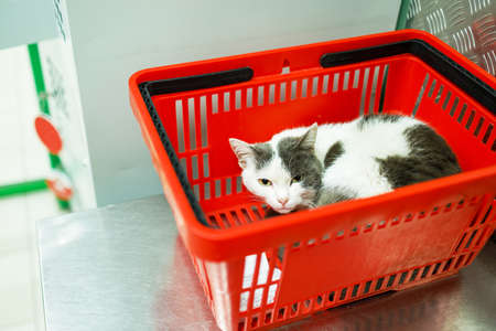 white cat lies in a red plastic shopping basket in a supermarket. comic photo from a pet store