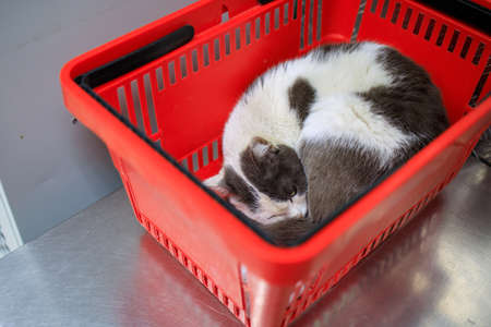 sleeping white cat in a red plastic basket from the supermarket. tired cat tired of waiting for the owner Stock fotó