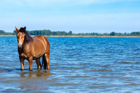 the horse stands in the water and looks into the frame. background skyline, the other side of the lake