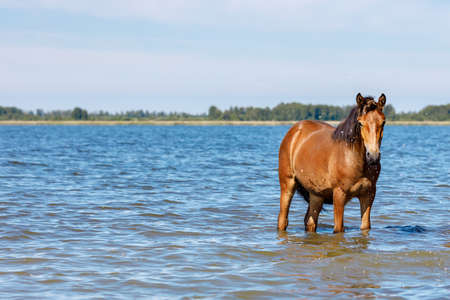 the horse at the right edge of the photo is standing in the water and looking at us. hot summer day cloudless sky