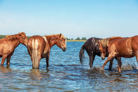 a group of horses take water treatments in the lake during a hot summer day. splashing horses Stock fotó