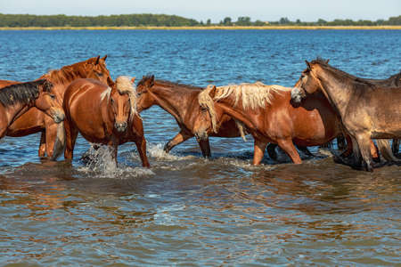 a herd of horses walks along the lake during a hot summer day. freedom not animals