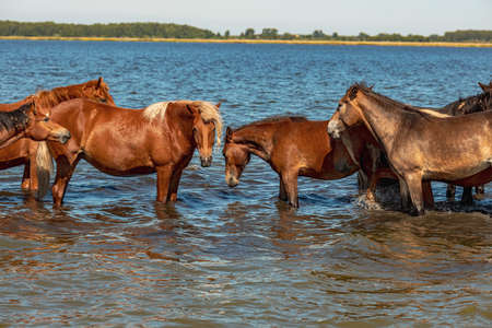 a herd of horses of different colors stand in the water and rest. bright sunny day Stock fotó