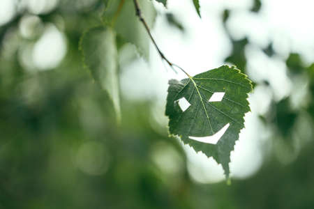 a face with a smile is carved on a leaf of a plant, the background is blurred