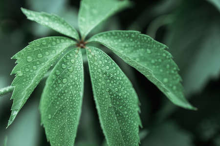 plant leaf close-up and drops on it. raindrops on a leaf Stock fotó
